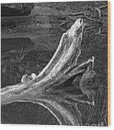 Bleached Log 1 Wood Print