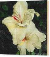 Bleeding Gladiola Wood Print by M C Sturman