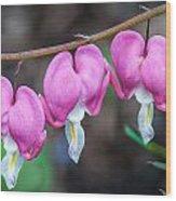 Bleeding Hearts 456 Wood Print