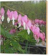 Bleeding Hearts With Bumblebee Wood Print