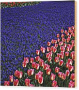 Blend Of Tulips Wood Print