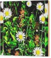 Blended Daisies Wood Print