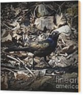 Blending In Metallic Starling Wood Print