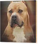 Blond Pit Bull By Spano Wood Print