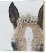 Blonde Horse Wood Print