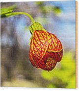 Blood Flower 9325 Wood Print