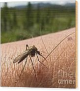 Blood Thirsty Mosquito On Human Arm Wood Print