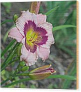 Blood Throated Lily 1 Wood Print