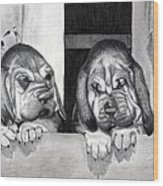 Bloodhound Puppies Dog Portrait  Wood Print