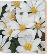 Bloodroot Blooms Wood Print