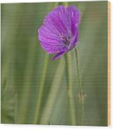 Bloody Cranesbill Flower Wood Print