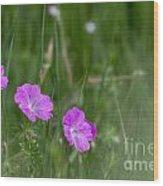 Bloody Cranesbill Wild Flowers Wood Print