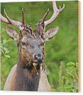 Bloody Elk Wood Print