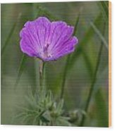 Bloody Geranium Wild Flower Wood Print