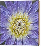 Bloom Wood Print by Karen Walzer
