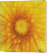 Bloom Of Dandelion Wood Print