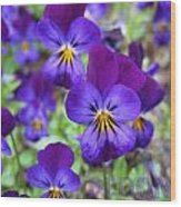 Bloom Purple Violets Wood Print