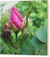 Bloom Wild Rose Bud Wood Print