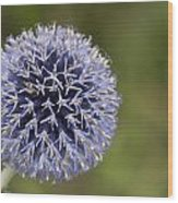Bloomed Blue Wood Print