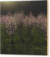 Blooming Almond Trees Wood Print