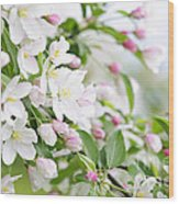 Blooming Apple Tree Wood Print by Elena Elisseeva