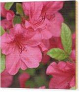 Blooming Azalea Wood Print