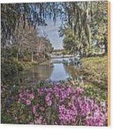 Blooming Azaleias At Middleton Place Plantation Wood Print
