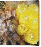 Blooming Barrel Cactus Wood Print