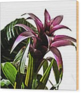 Blooming Bromeliad Wood Print