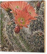 Blooming Cacti Wood Print