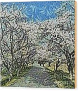 Blooming Cherry Tree Avenue Wood Print