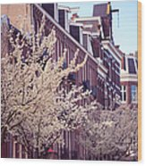 Blooming Decoration Of The Streets. Pink Spring In Amsterdam Wood Print