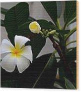 Blooming Frangipani Flower Alongside Bud Wood Print