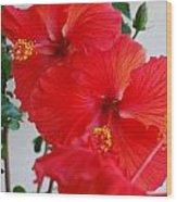 Blooming Hibiscus Wood Print