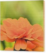 Blooming Marigold Wood Print