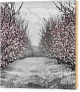 Blooming Peach Orchard Wood Print by Elena Elisseeva