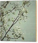 Blooming Pear Tree Wood Print
