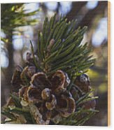 Blooming Pinecone Wood Print