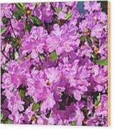 Blooming Pink Azaleas Wood Print