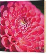Blooming Red Flower Wood Print
