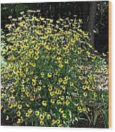 Blooming Rudbeckia Bush Wood Print
