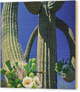 Blooming Saguaro Wood Print