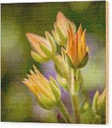 Blooming Succulents I Wood Print