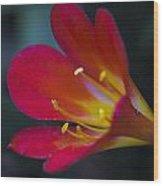 Blooming Summer Wood Print