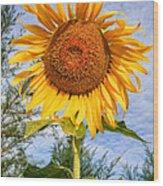 Blooming Sunflower V2 Wood Print by Adrian Evans