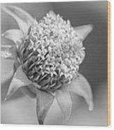 Blooming Weed Wood Print