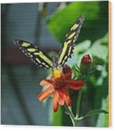 Blooms And Butterfly1 Wood Print