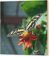 Blooms And Butterfly2 Wood Print