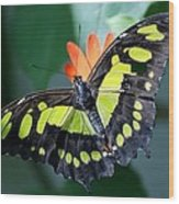 Blooms And Butterfly5c Wood Print