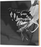 Blooms And Butterfly7 Wood Print